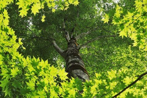 カヤノ平・大ブナ郷土の森にて