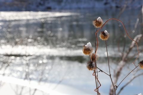 琵琶池    12月12日撮影