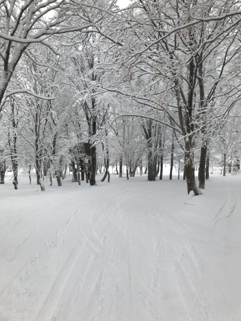森もすっかり雪化粧